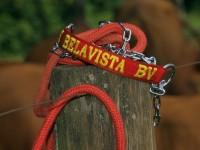 15-senepol-fazendaBelaVista
